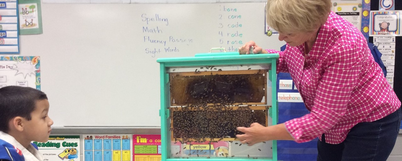 bees in the classroom